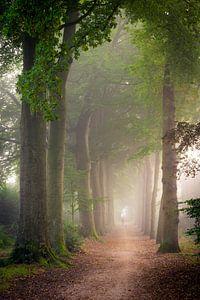 Boombergpark, Hilversum van