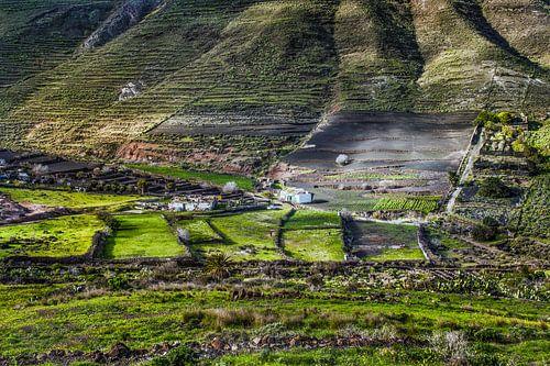 Landbouw op Lanzarote van Harrie Muis