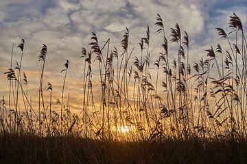 riet met zonsopkomst von Ferry Kalthof