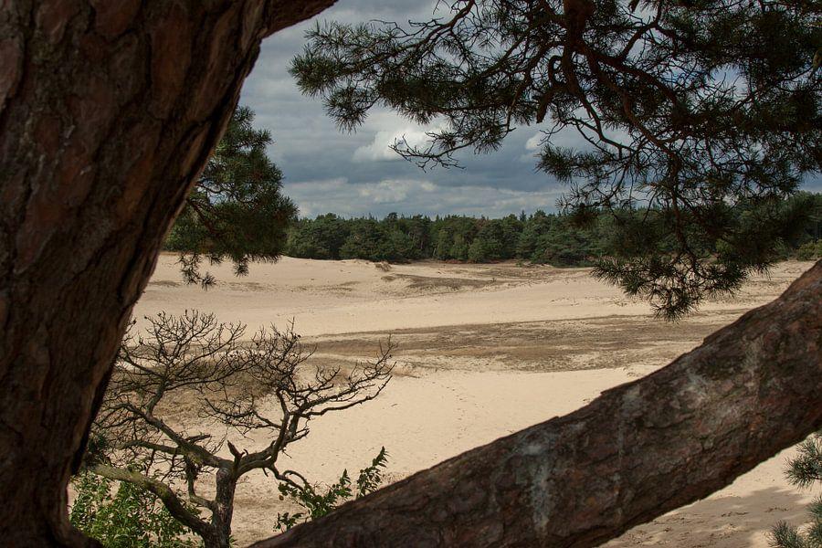 Kootwijker Zand van Maarten Krabbendam