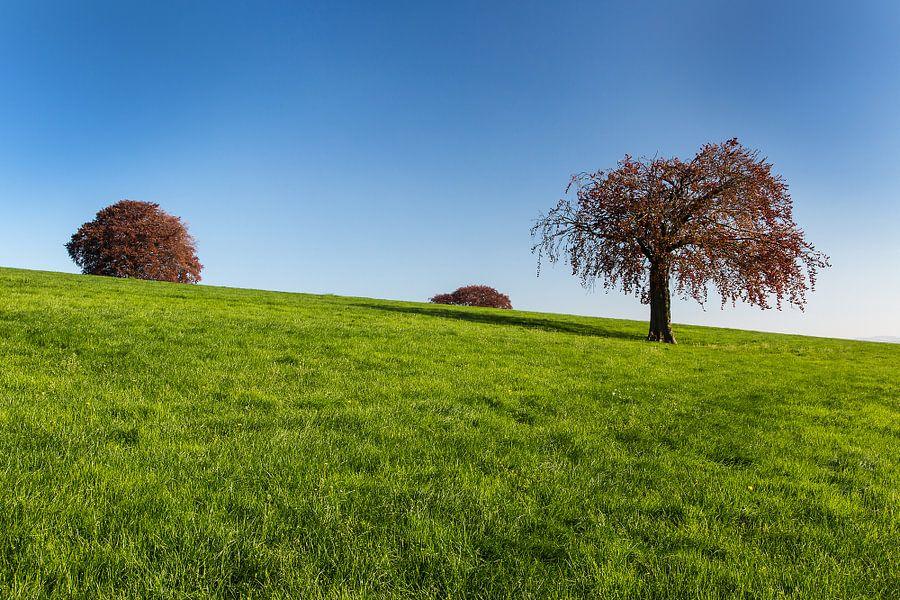 Bomen in weiland van Wim Roebroek