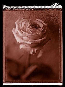 Rose polaroïd sur Karel Ham