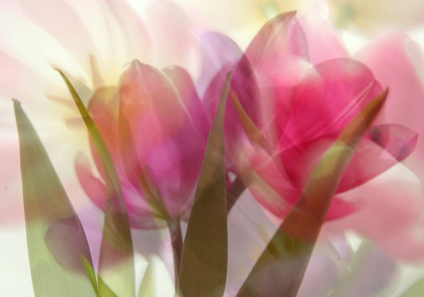 Tulipes en bouquet