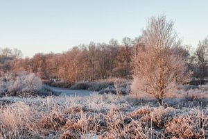 Winter morgen