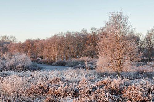 Winter morgen van Karla Leeftink