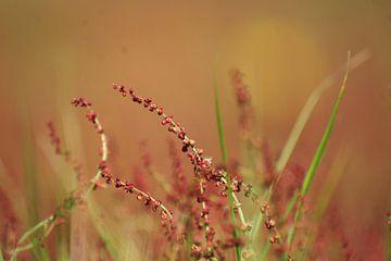 Heidekrautpflanze von Niek Traas