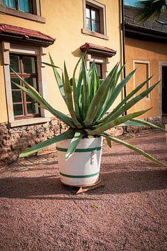 Agave plant tegen een mediterrane gevel van Suzanne Schoepe