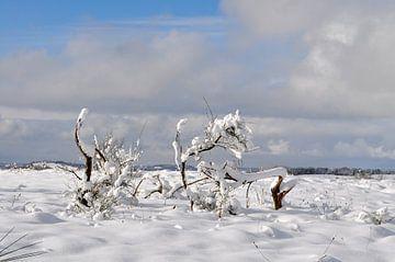 Winterlandschaft, Schafberg / Middelhagen auf Rügen von GH Foto & Artdesign
