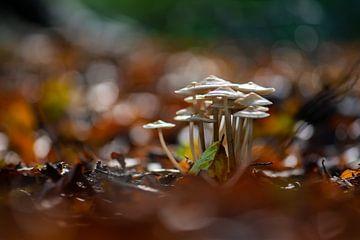 Pilze zwischen den Herbstfarben von Tania Perneel