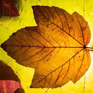 Herbstblattstudie von Nicole Bäcker