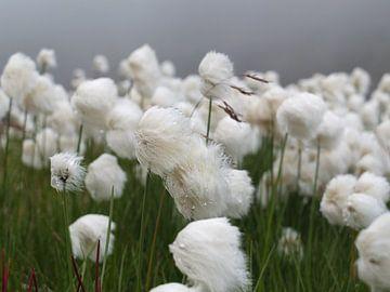 Wollegras IJsland von Yvonne Machielsen