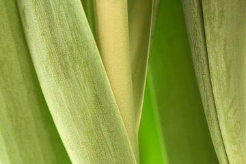 Tulpen Blatt von Ad Jekel