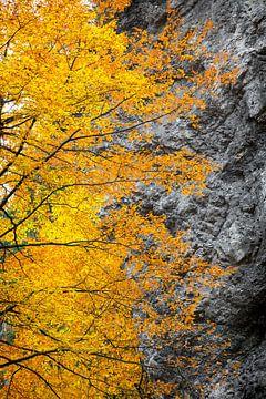 Felle herfstkleuren in de bergen