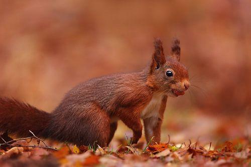 Eekhoorntje met een pinda von LHJB Photography