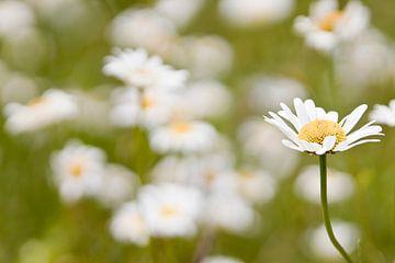 Blume auf einer Blumenwiese von Anne Dellaert