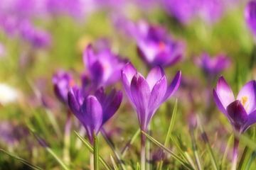 Frühlingsblüher van Dagmar Marina