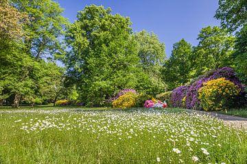 Blumenpracht im Kurpark von Bad Homburg van Christian Müringer