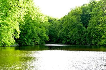 Belgische bossen van Leon van Zuilekom