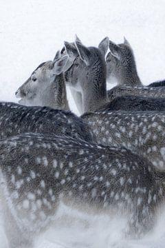 Foto van herten in de sneeuw. van Therese Brals