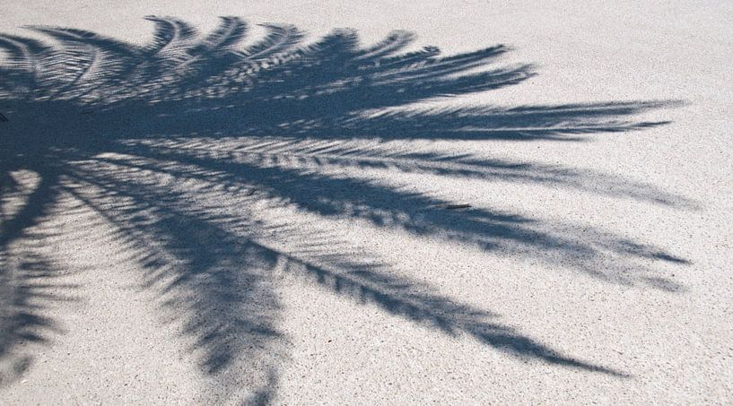 Palm shadow sur Arthur Wijnen