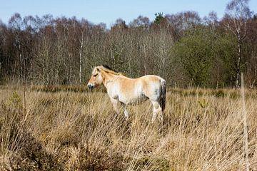 paard von Arno Photo