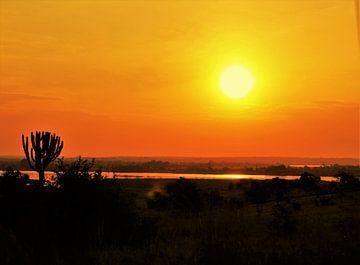 Afrikaanse zon van Marije Zwart
