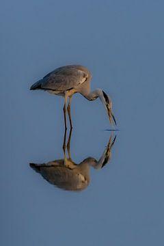 Spiegel Spiegel von Andrea de Vries