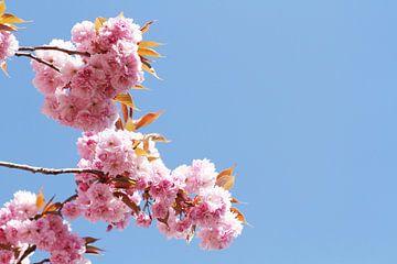 Japanse bloeiende kers III van Anja Bagunk
