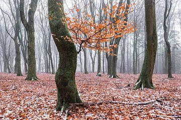 Winterliche Blätter von Tristan Lavender