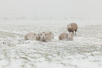 Schapen in sneeuwstorm van FotoBob
