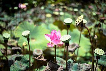 Waterlelies van Marja van Noort