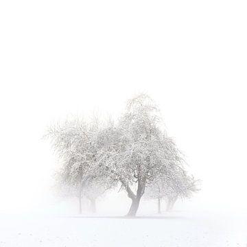 Bäume im Winter van Jana Behr