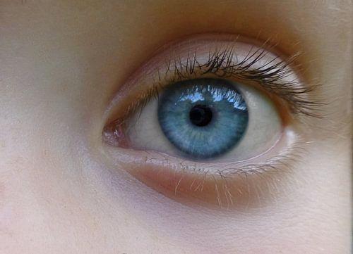 blue eyes bilder auf leinwand poster bestellen ohmyprints. Black Bedroom Furniture Sets. Home Design Ideas