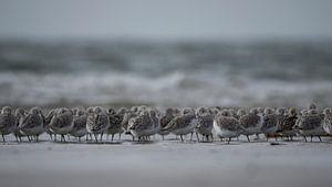 standlopers strand IJmuiden