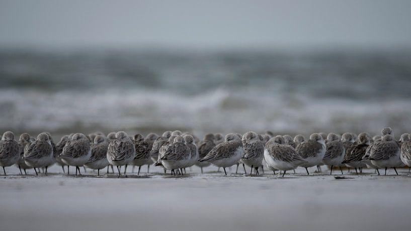standlopers strand IJmuiden van Martijn Winkelaar