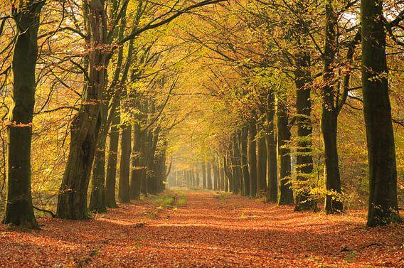 Herfst in een laan van Sander van der Werf