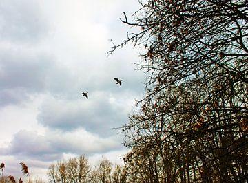 Wildenten i mFlug von M.A. Ziehr