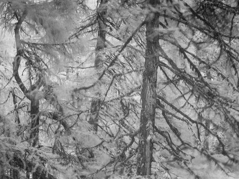 Bomen in een winderig bos, close-up infrarood opname van Mark van Hattem