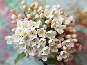 Flowerdream van