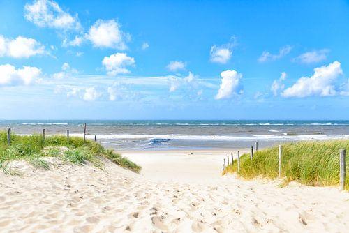 Pad door de duinen naar het strand in de zomer