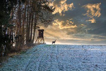 Hirsch im Wald von Uwe Merkel