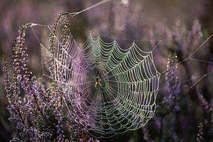 Makro-Spinnennetz in der Heide von Susan van Etten