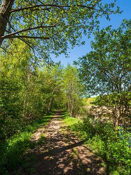 Landschap met pad en bomen bij Kuchelmiß van Rico Ködder