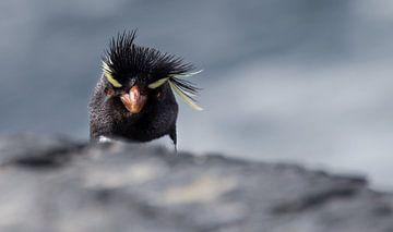 Angry Bird sur Claudia van Zanten
