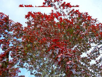 Tree Magic 56 van MoArt (Maurice Heuts)
