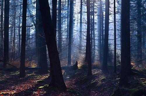 Foggy forest von Olha Rohulya