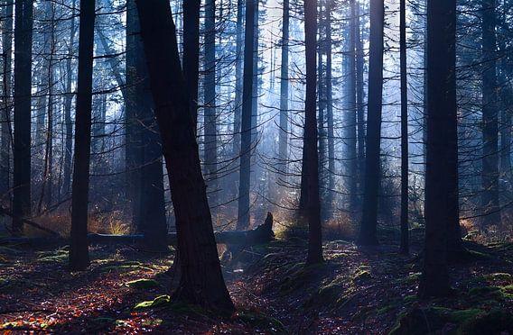 Foggy forest van Olha Rohulya