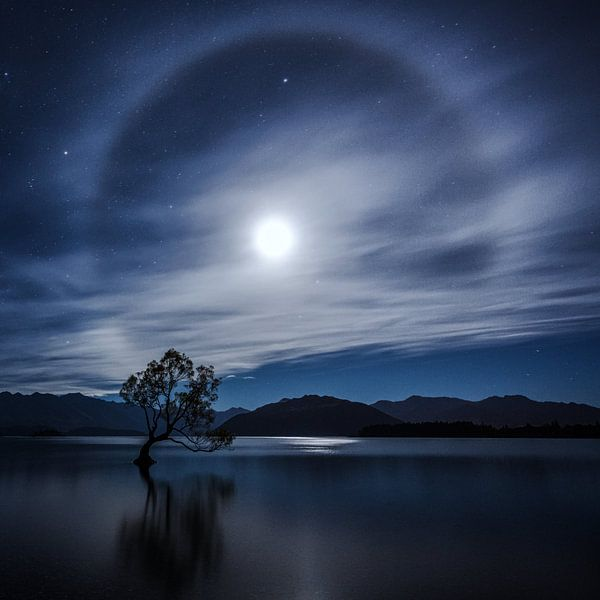 That Wanaka Tree Middernacht van Cho Tang