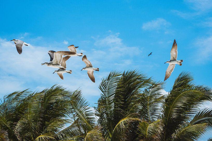 Vliegende meeuwen boven palmbomen op een blauwe lucht in Isla Holbox, Mexico van Michiel Dros