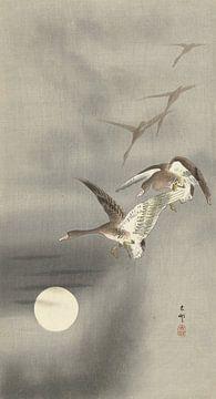 Ganzen in vlucht van Ohara Koson